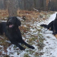 Psy z mikroczipami