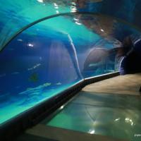 /thumbs/fit-200x200/2019-06::1559788076-nickt-wroclaw-oceanarium-afrykarium-zoo-ogrod-zoologiczny-007.jpg