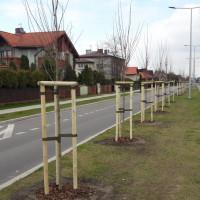 Pierwszy etap nasadzeń drzew na ulicy Słonecznej zakończony
